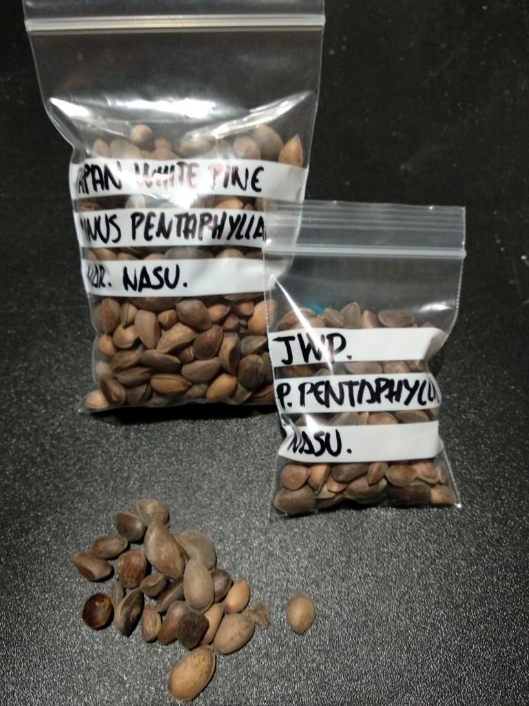 Semillas Penta, Buerge, Palmatum, Kaki, Secuoya y Sakura  Img_2012