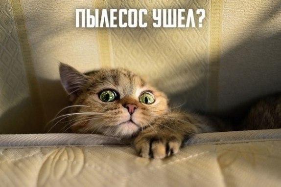 Поюморим? Смех продлевает жизнь) - Страница 15 Zdixmg10