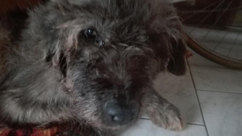 Mon chien très très âgé Img_2010