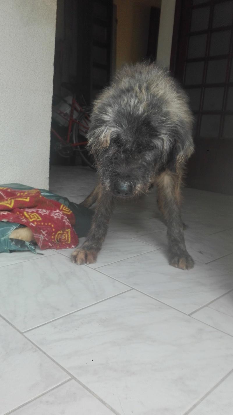Mon chien très très âgé Img_2011