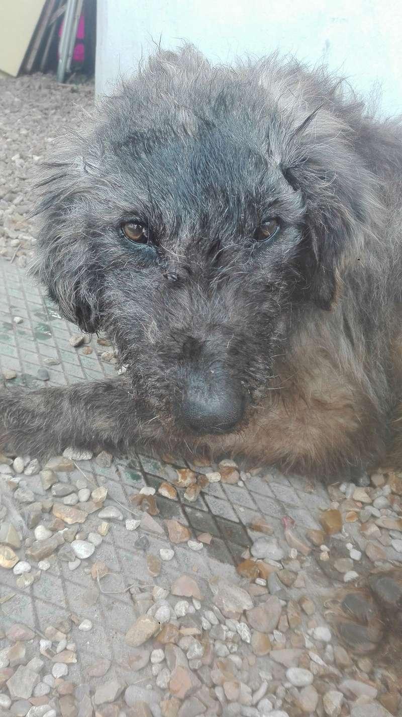 Mon chien très très âgé Img_2013