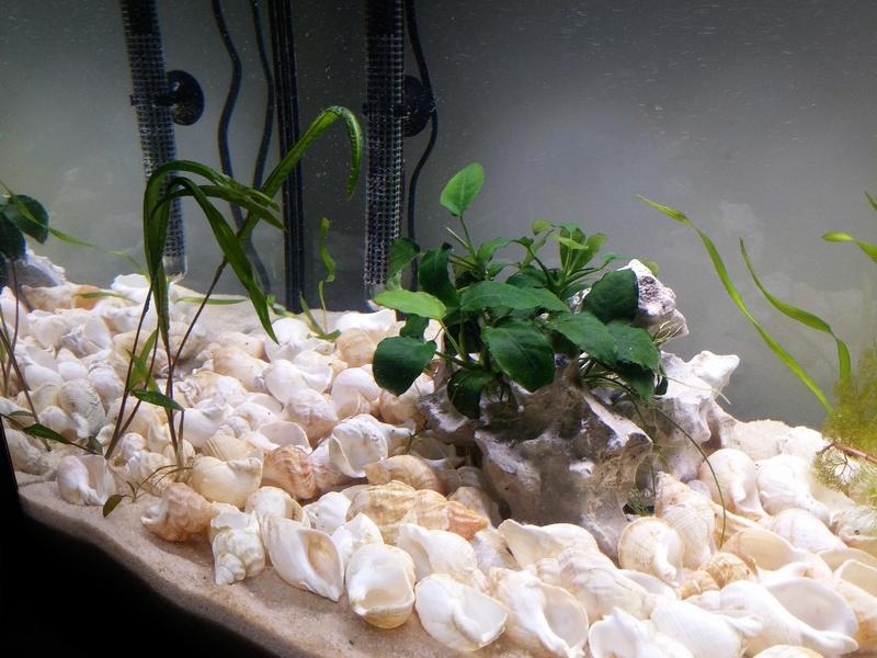 Futur habitat de Neolamprologus multifasciatus ou similis 20180311