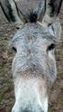 BOURIQUET - ONC âne né en 2009 - adopté en août 2017 par Marie - Page 2 25445910