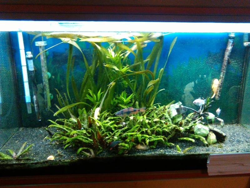 besoin d'aide pour identifier mes algues Img_2012