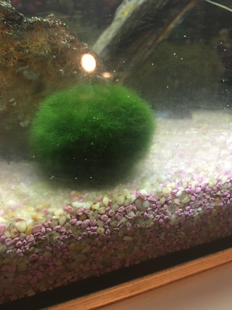 Petite boule blanche dans mon aquarium  4eadff10