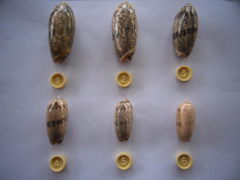 IDENTIFICATION OLIVES Serie_10