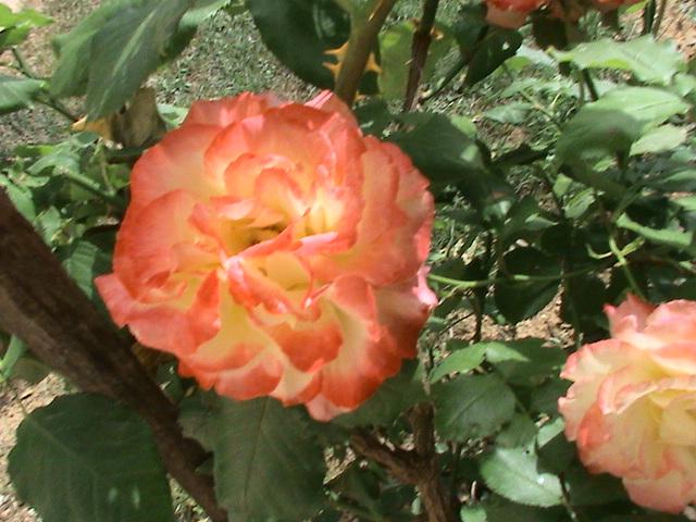 J'ai rendez-vous dans mon jardin Dsc05012