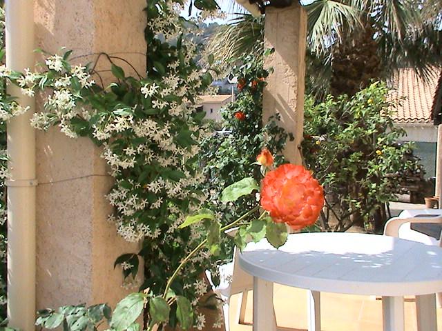 J'ai rendez-vous dans mon jardin Dsc05013