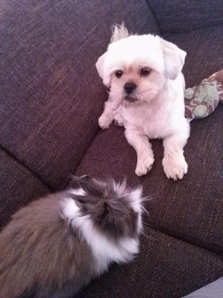 Het huisdieren fotoboek 22237010