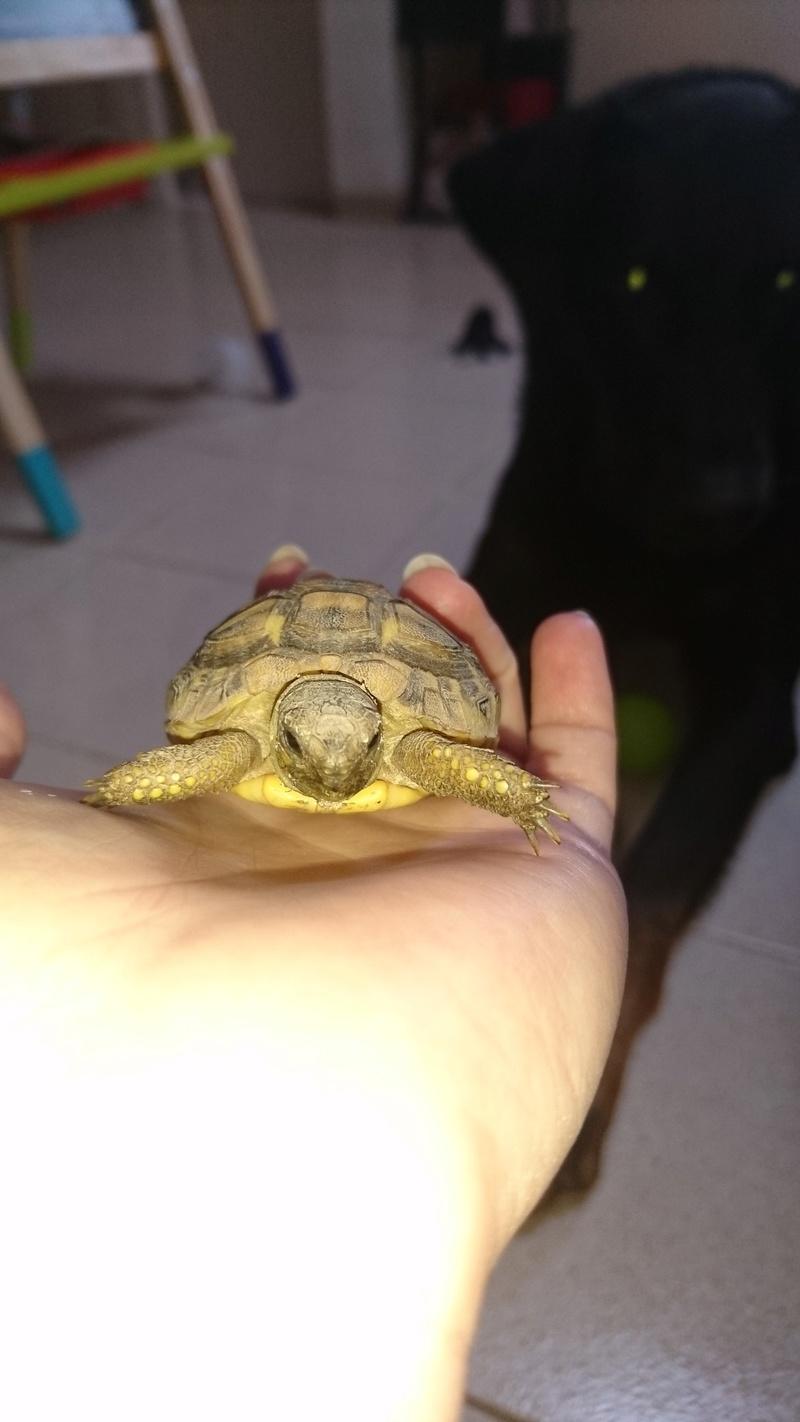 espèces tortues Dsc_2715