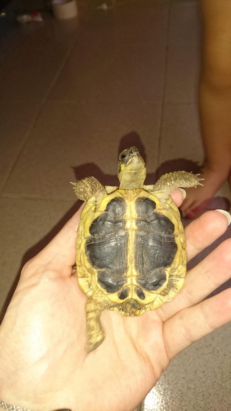 espèces tortues Dsc_2719