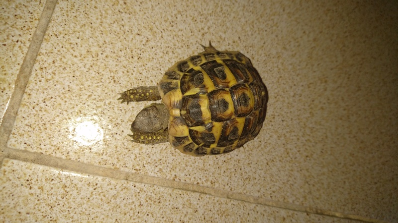 espèces tortues Dsc_2720