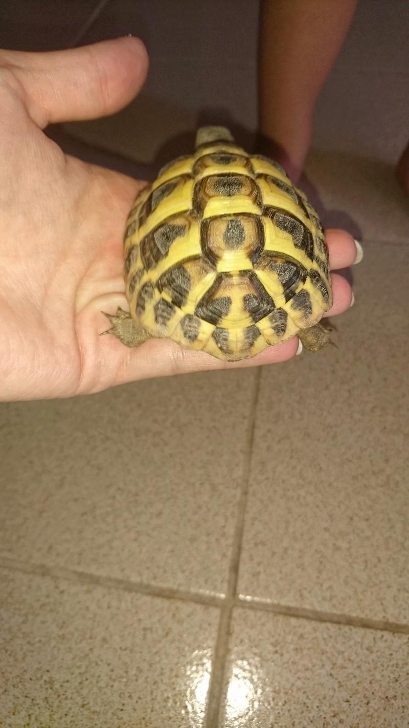 espèces tortues Dsc_2721
