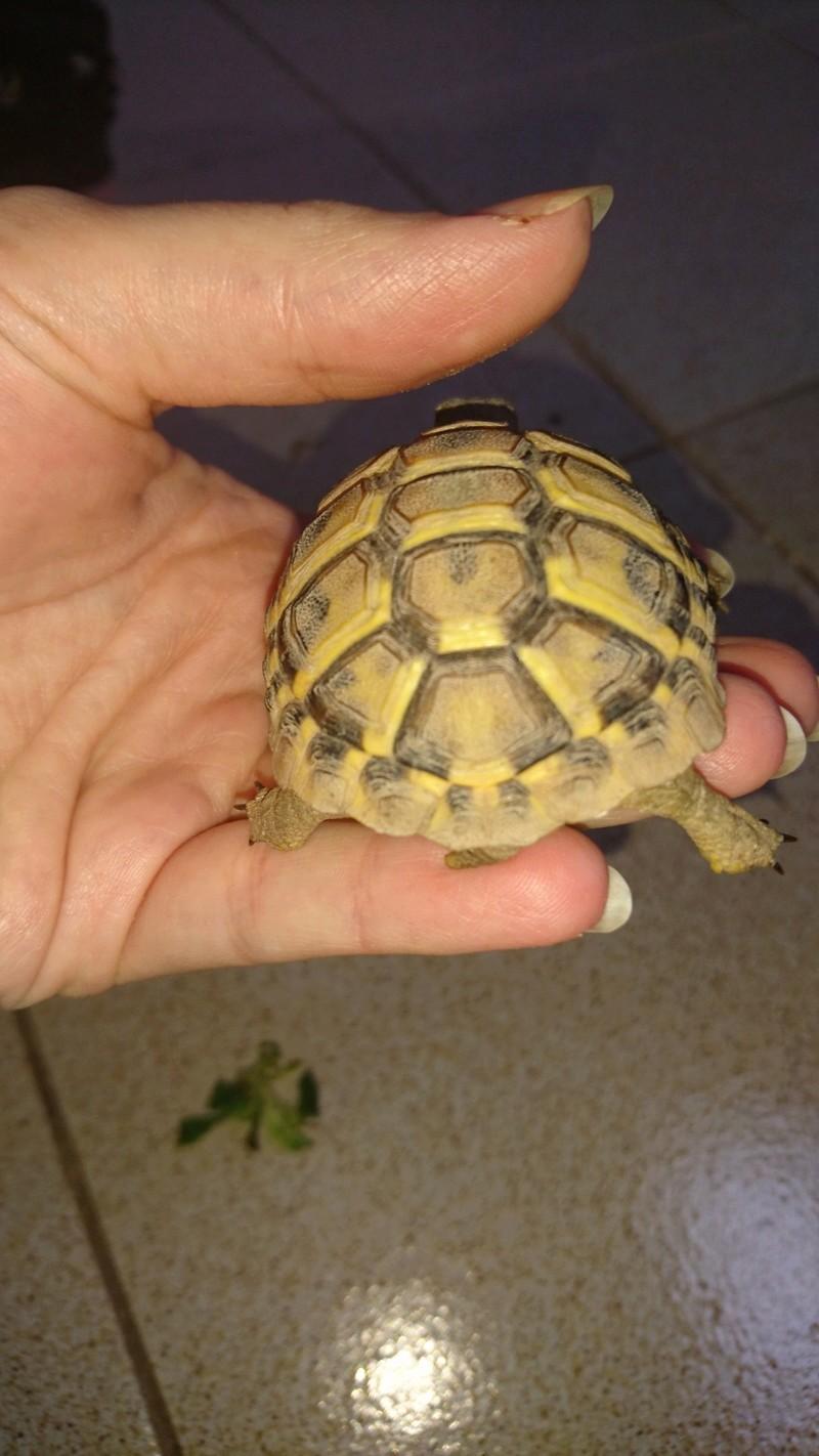 espèces tortues Dsc_2722
