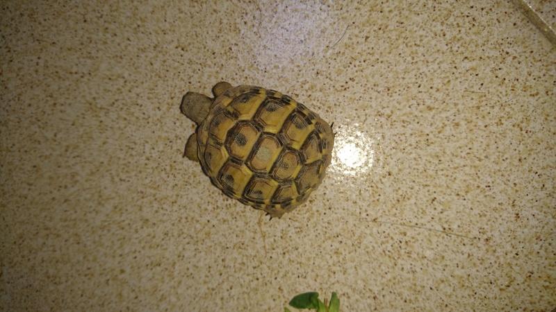 espèces tortues Dsc_2723