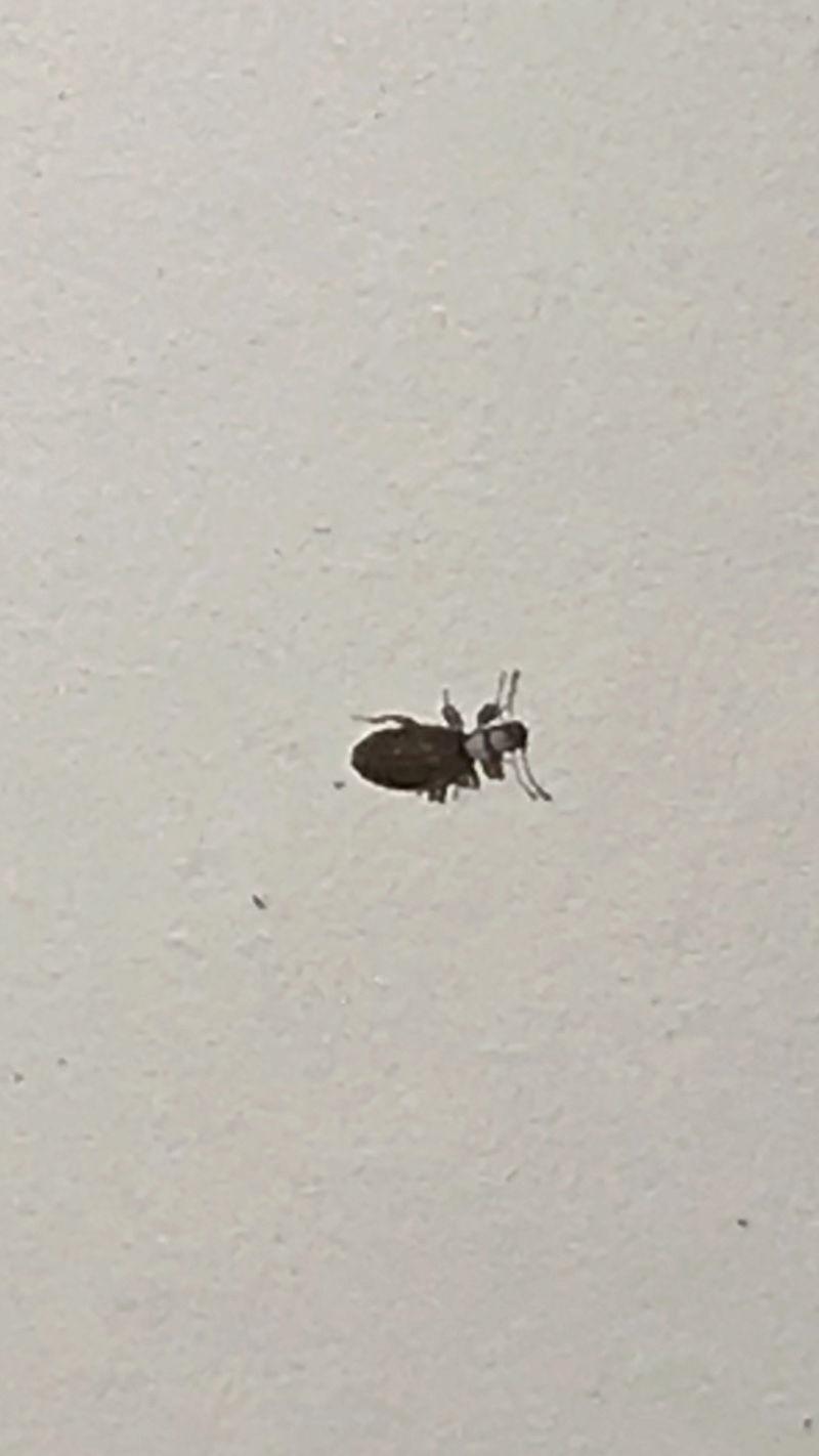 Quel est cet insecte?  293e1610
