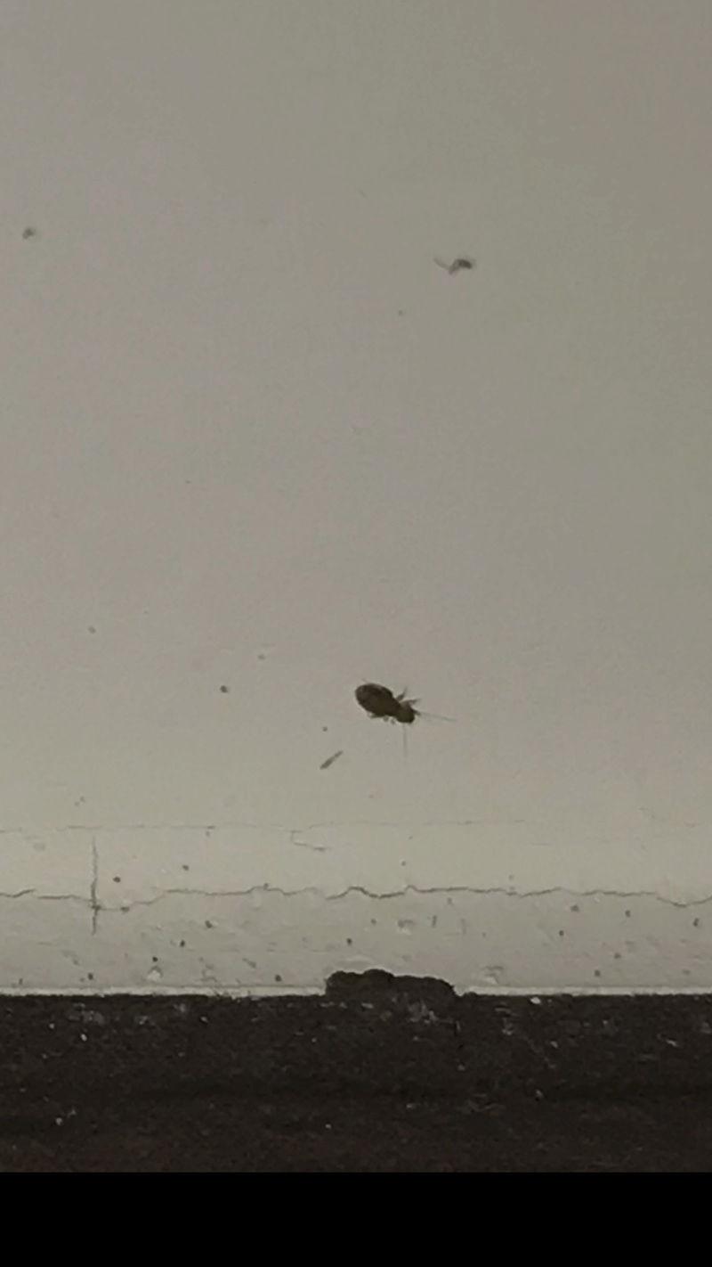 Quel est cet insecte?  4593a510