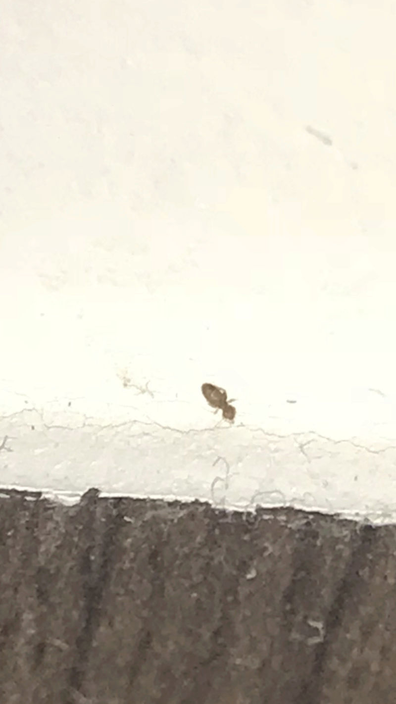 Quel est cet insecte?  C7816e10