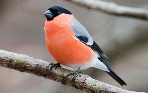 Ornithologie Notre Passion