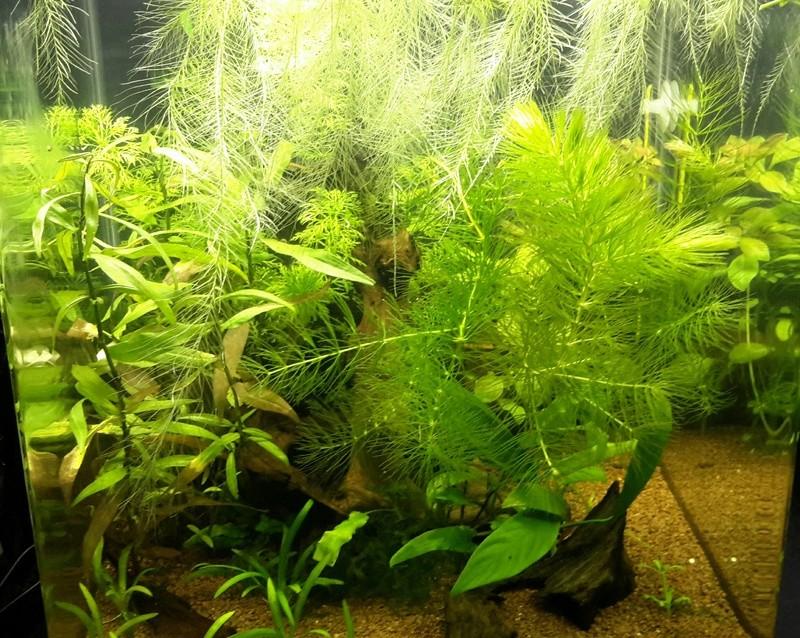 Le futur aquarium de ???  Studio10