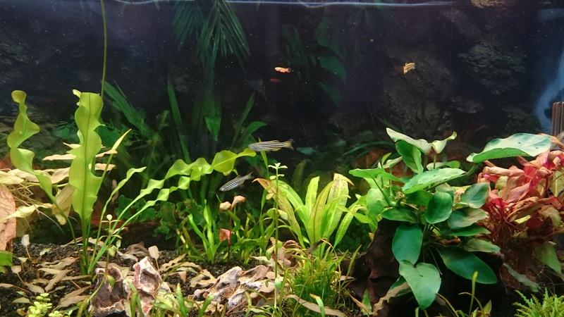 Aquarium 250 l - Page 2 Dsc_1210