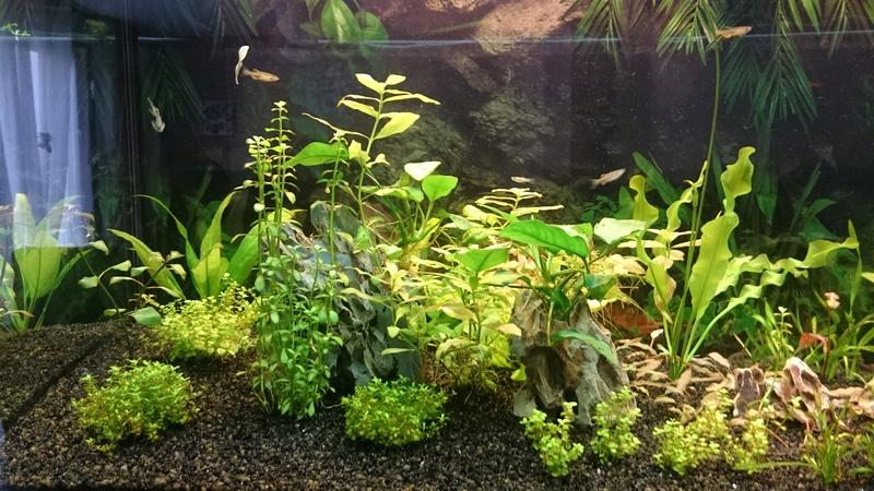 Aquarium 250 l - Page 2 Dsc_1211