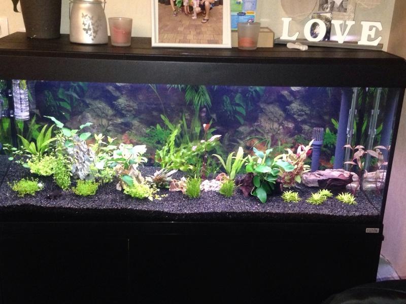 Aquarium 250 l Mms_2013