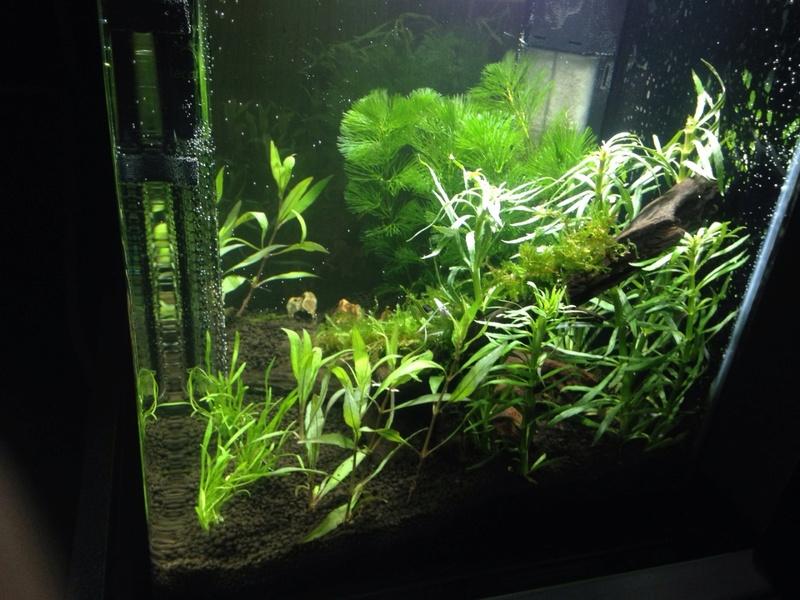 Besoin de conseil pour un nano aquarium 30 l Mms_2015