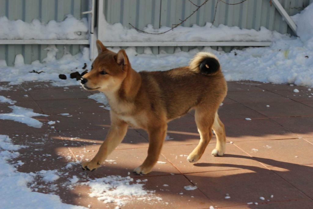 Куплю щенка 15208420
