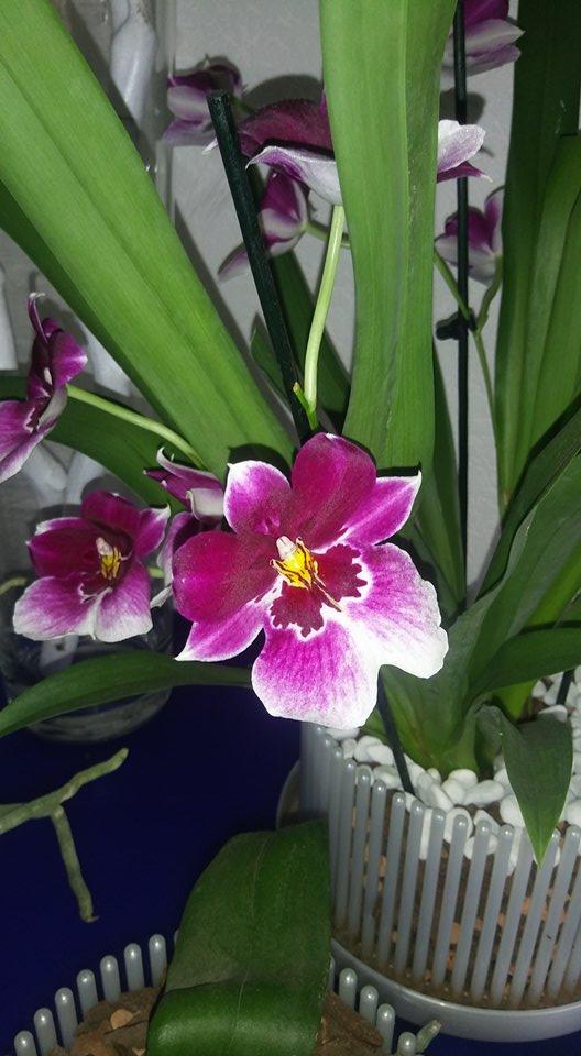 Momentan blühende Pflanzen - Seite 2 29550410