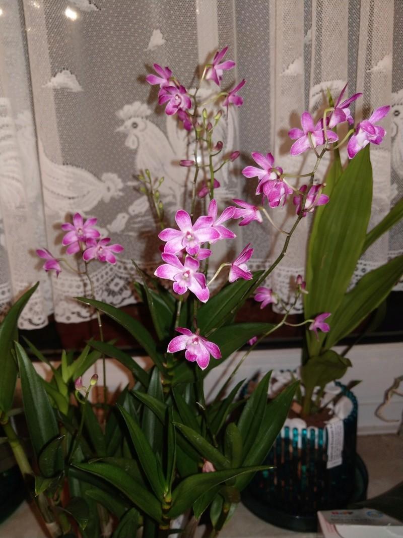 Orchideen-Neuzugang 2 - Seite 3 Imag0110