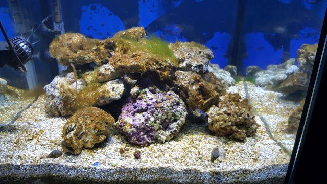 aide identification algues 125l_a10