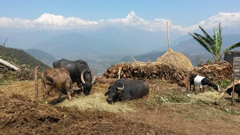 Aglou - Pokhara ? mars 2018 - Page 2 20180314