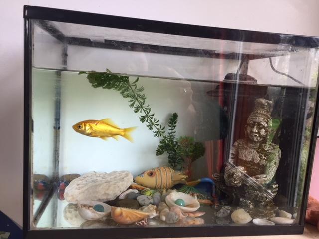 Quel poisson dans un 20L rectangulaire Img_2210