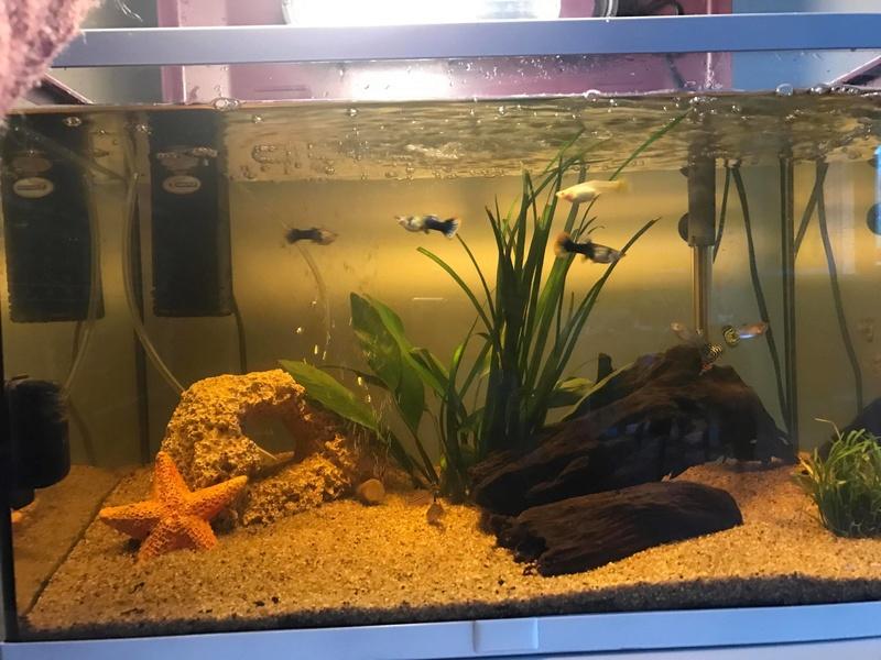 Eau jaune dans mon aquarium 60litres  29830710