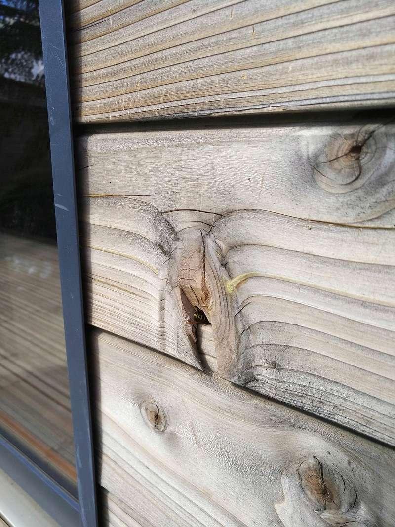 Nid de guêpes dans bardage maison ossature bois 2 années de suite Img_2011