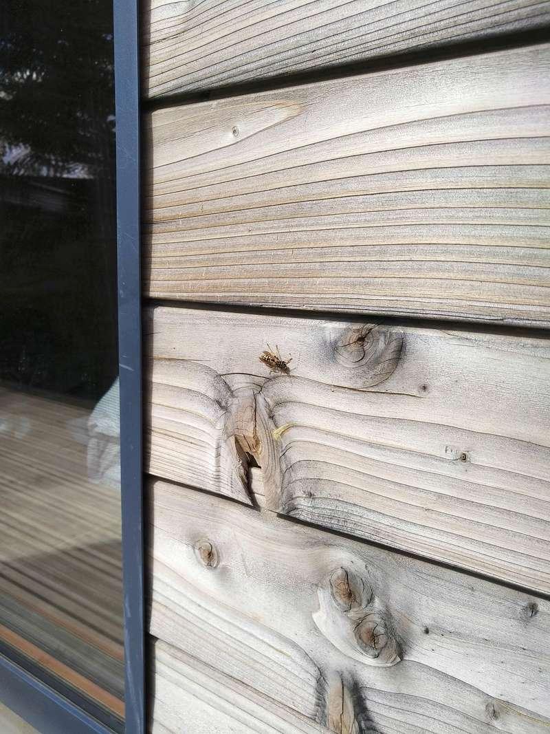 Nid de guêpes dans bardage maison ossature bois 2 années de suite Img_2012