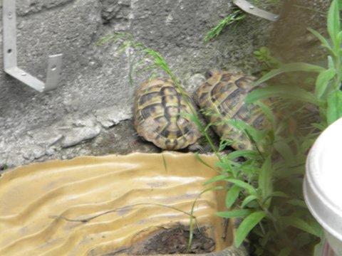 tortue et ras Parc_a10