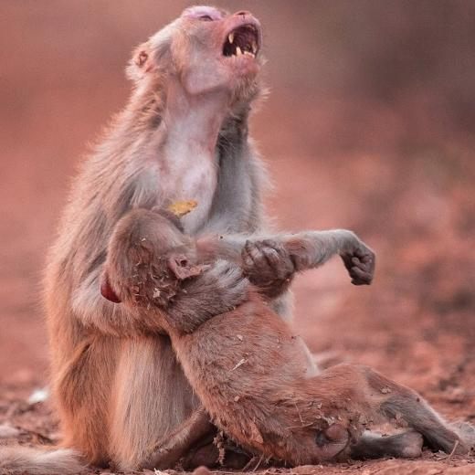 Quais mokutons de Hashirama e quais níveis do Susanoo de Madara aguentam esses jutsus:  - Página 2 Monkey10