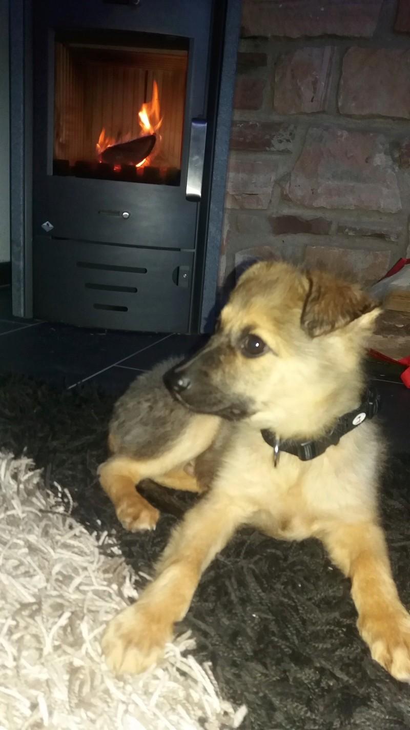 Adoption de OLAF ( anciennement COCO ) 20180310
