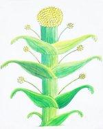 AE 22. Cirenaica. Cirene. Koinon  de Cirene, ca. 250-246 a.C. Planta de Silphium Silfio11