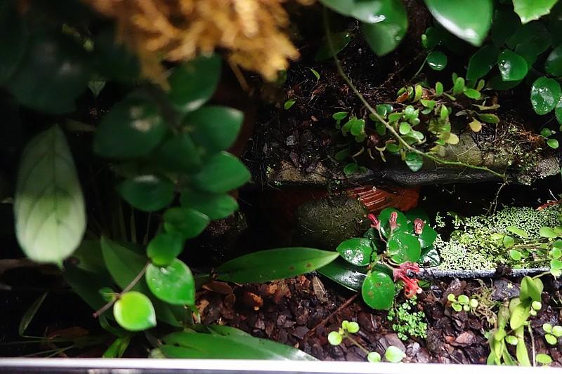 Urwald im Glas...meine Wohnzimmervitrine Compds26