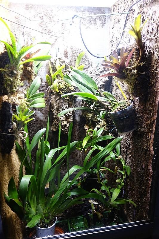 Urwald im Glas...meine Wohnzimmervitrine Compds28