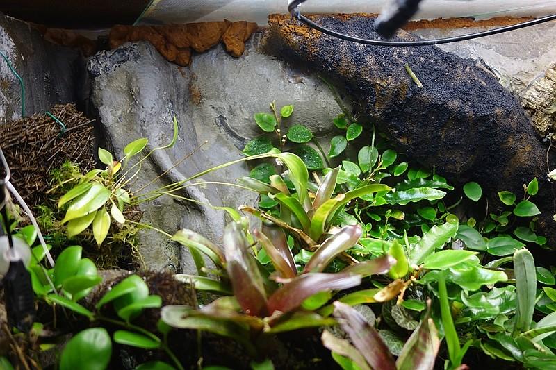 Urwald im Glas...meine Wohnzimmervitrine Compds31