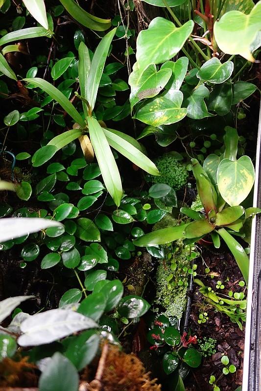 Urwald im Glas...meine Wohnzimmervitrine Compds33