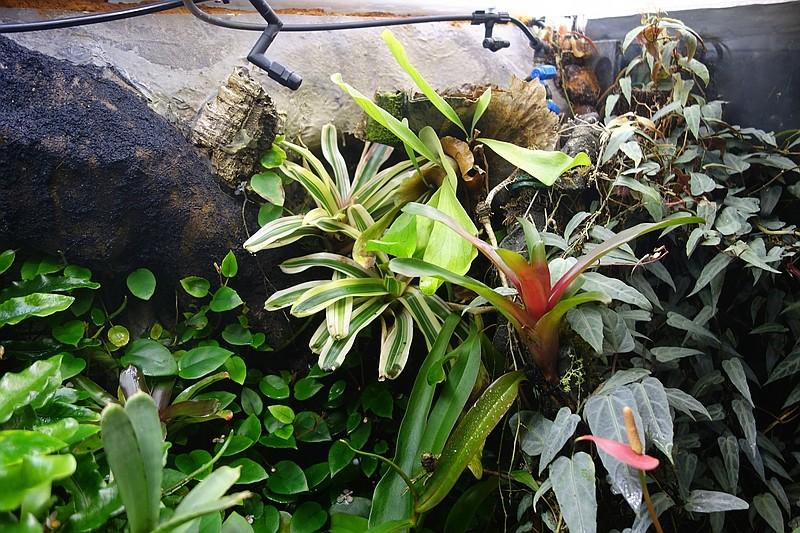 Urwald im Glas...meine Wohnzimmervitrine Compds34