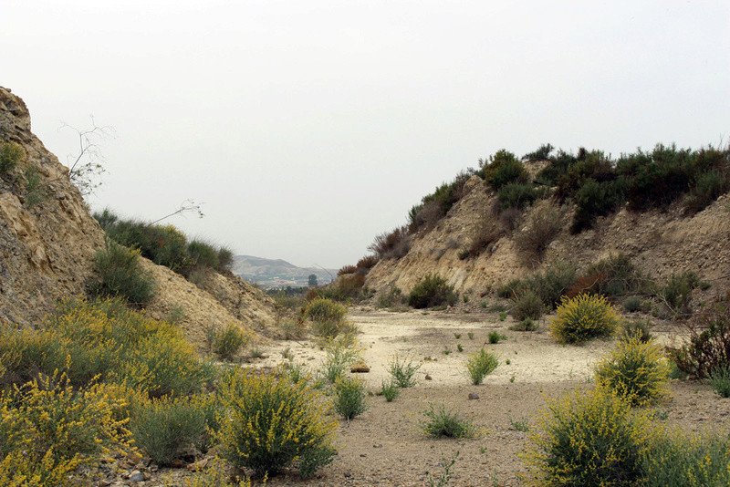 grupo mineralogico de alicante - Grupo Mineralógico de Alicante 0510
