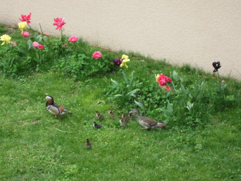 des couleurs dans mon parc Img_0917