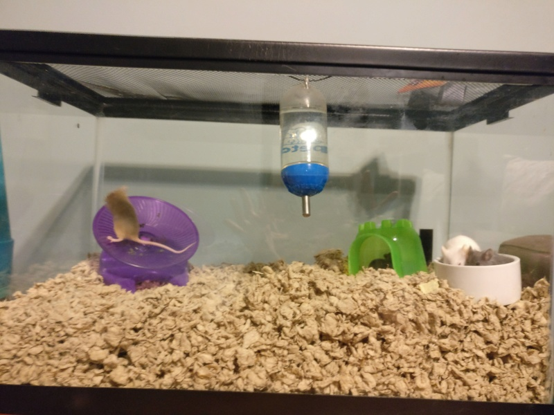 Topper or larger tank? 15230611