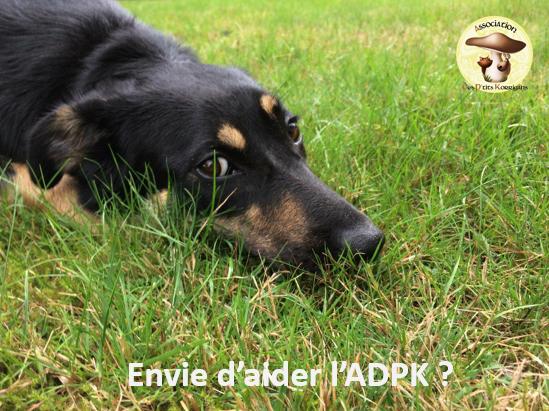 Aidez l'ADPK avec Guivers !  Captur10